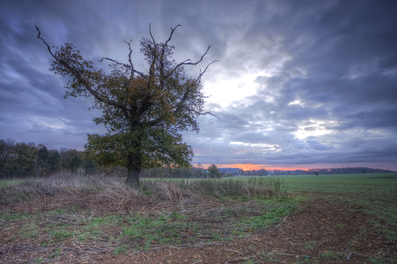 Grimsthorpe estate Sunrise