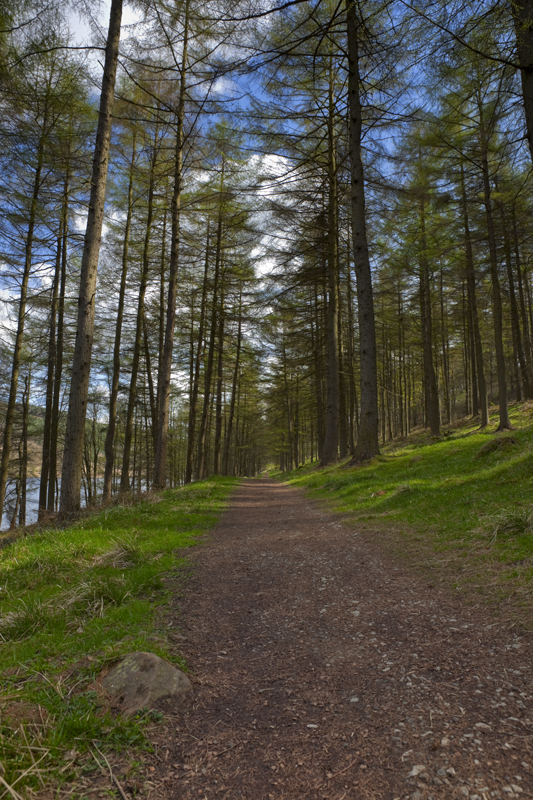 Woodland Path, Ladybower Reservoir
