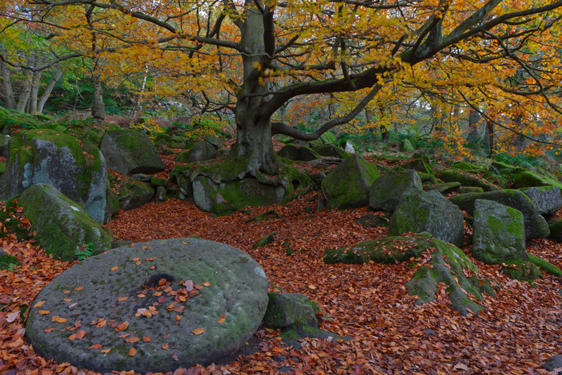 Autumn Colours, Padley Gorge.