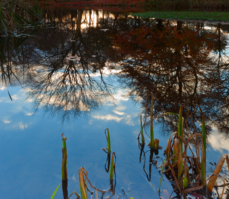 Reflections, Lumsdale Mill Pond.