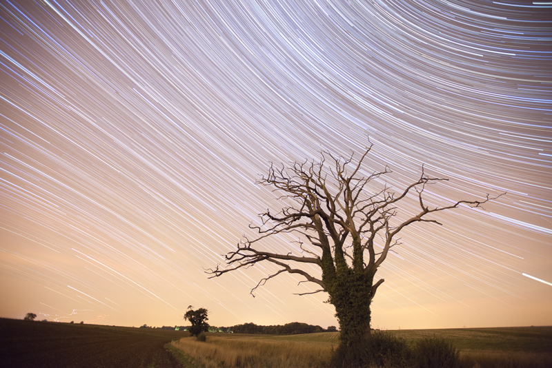 Dead Tree Startrails