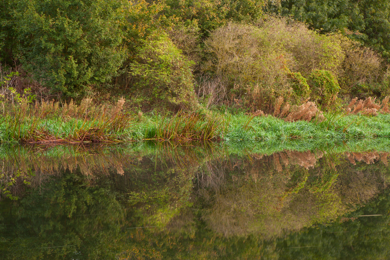 Reflections, River Nene.